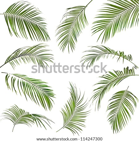 Collection set of green palm leaves isolated - stock photo