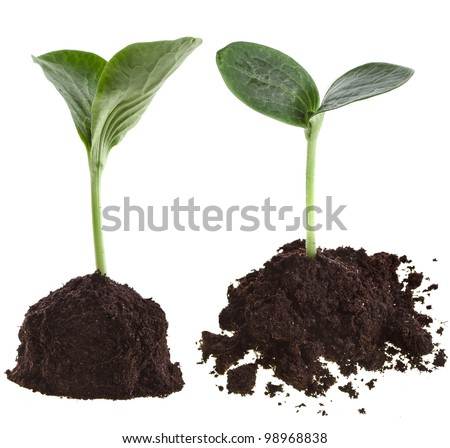 Collection set of Seedling green plant in soil pile isolated on white background - stock photo