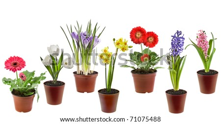Collection set of Spring flowers  in the pot isolated on a white background - stock photo