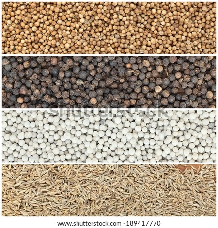 collection spices - stock photo