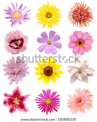 Collection summer flowers, America plants - stock photo