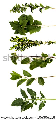 collection tree limbs isolated on white background - stock photo