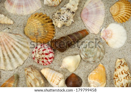 Collection with many different shells in the sand