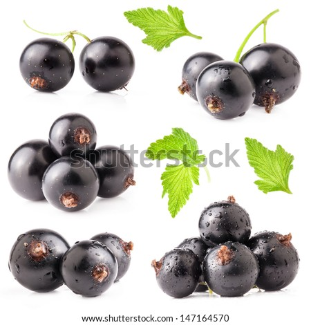 Collections of Black currant isolated on white background - stock photo