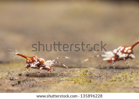 Collembola - stock photo