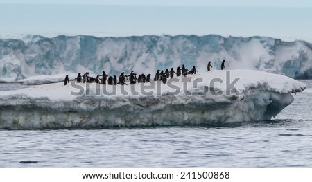 Colony of adelle penguins on iceberg of Antarctica - stock photo