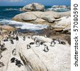 "colony of african penguins (Spheniscus demersus; also known as the Black-footed Penguin or Jackass Penguin) at nature resort ""Boulders""; South Africa - stock photo"