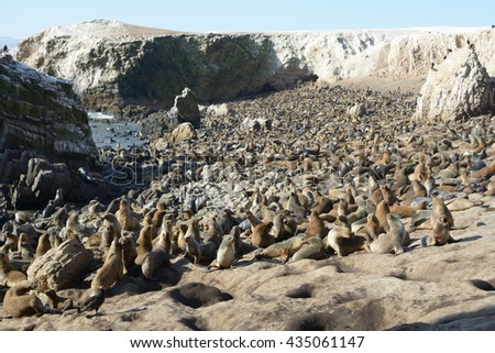 Colony of sea lions on the beach