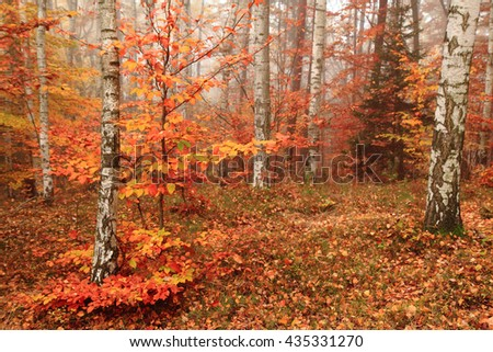 color autumn forest as nice natural background