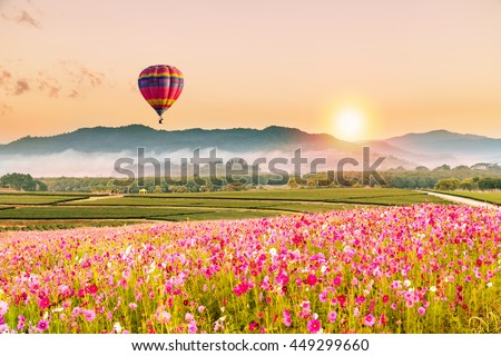 color balloon and Beautiful Cosmos Flower in park at sunset time