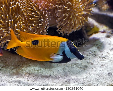 color beauty fish life in sea - stock photo
