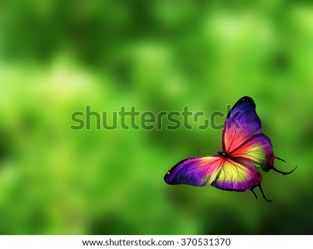 Color butterfly flying - stock photo