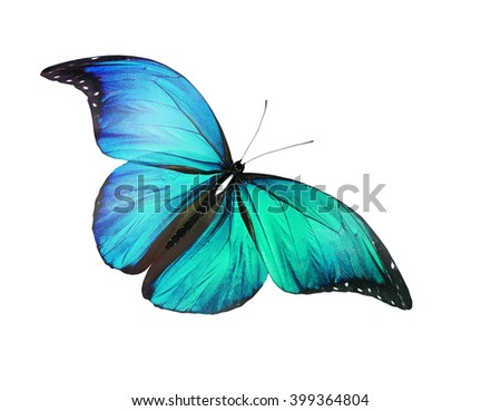 Color butterfly, isolated on white background - stock photo