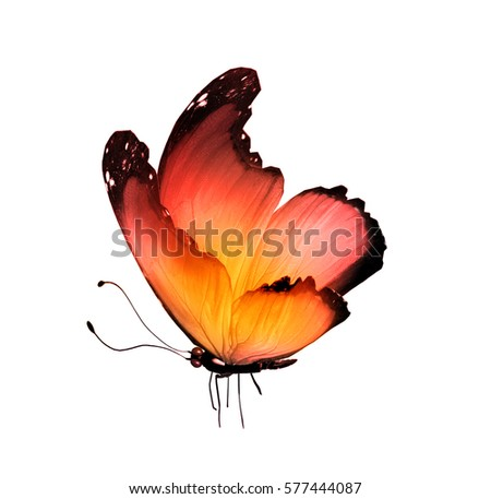 Colourful Butterfly Stock Images, Royalty-Free Images & Vectors ...