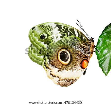 Color butterfly on leaf, isolated on white
