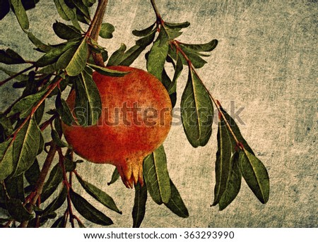 Color card with pomegranate - stock photo