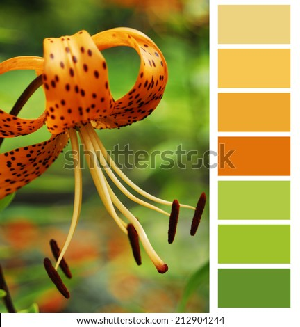 color chart selection for interior - stock photo