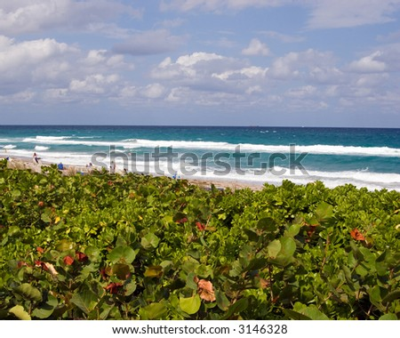 Color DSLR Beach Scenic, Boca Raton, Florida.  Green dune plants in the foreground and blue Atlantic Ocean water with white surf in the background. Horizontal with copy space for text. - stock photo