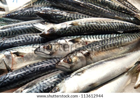 Color DSLR image of black, white and grey fresh mackerel on ice for sale at a fish market; in horizontal orientation - stock photo