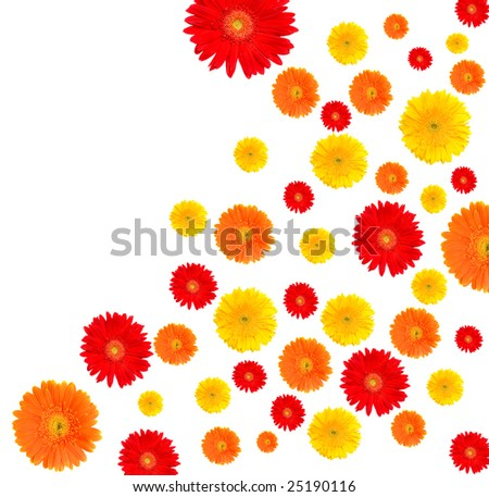 color flower on white background - stock photo
