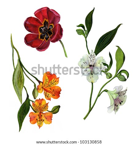 Color illustration of flowers isolated on white background - stock photo