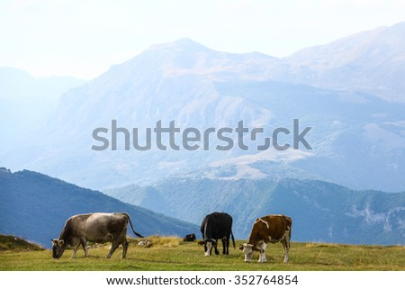 Color image of some cows on a field.