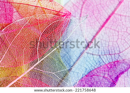 color leaves - stock photo