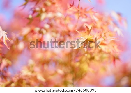 https://thumb1.shutterstock.com/display_pic_with_logo/167494286/748600393/stock-photo-color-leaves-in-a-japanese-garden-in-autumn-748600393.jpg