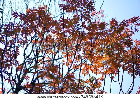 https://thumb1.shutterstock.com/display_pic_with_logo/167494286/748586416/stock-photo-color-leaves-in-autumn-748586416.jpg