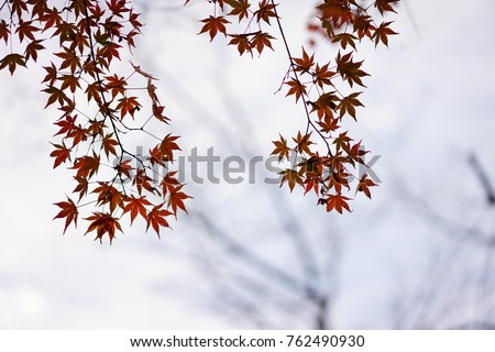 https://thumb1.shutterstock.com/display_pic_with_logo/167494286/762490930/stock-photo-color-leaves-in-japan-762490930.jpg