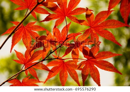 https://thumb1.shutterstock.com/display_pic_with_logo/167494286/695576290/stock-photo-color-leaves-in-kyoto-695576290.jpg