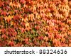 Color of fall - stock photo