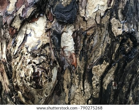 Color of Rain tree(Samanea saman) bark ,Tree bark texture, tree bark closeup
