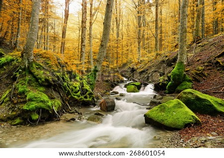 color of the forest in autumn - stock photo