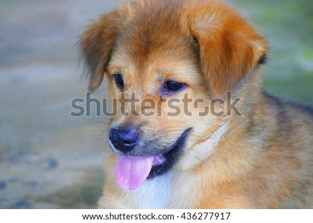 Color Painting Close-Up Side Face Adorable Little Brown Puppy Dog on Sandstone Texture