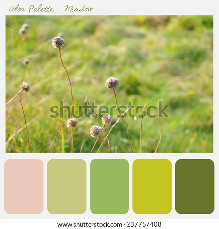 Color palette - Meadow - stock photo