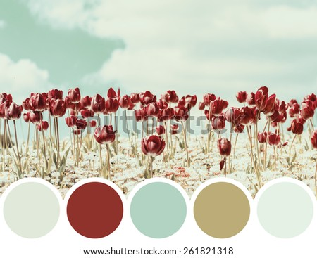 Color Palette Of Retro Red Spring Tulips Blossom - stock photo