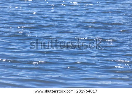 Color patterns of blue and white in reflections in the water background