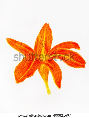 color pencil drawing lily on paper background and Color Abstract background.