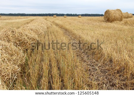 Color photo of rolls of hay in the field - stock photo