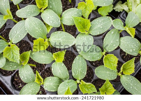 Color picture of seedlings in pots in a nursery - stock photo