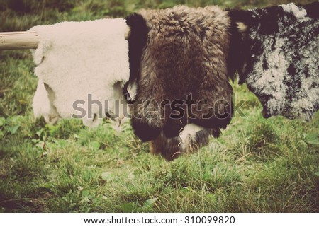 Color picture of sheep skins and furs hanging out to dry - stock photo