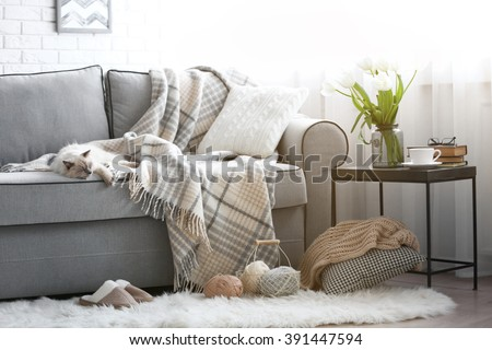 Color-point cat lying on a sofa in living room - stock photo