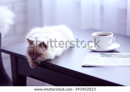 Color-point cat lying on black table in living room, close up