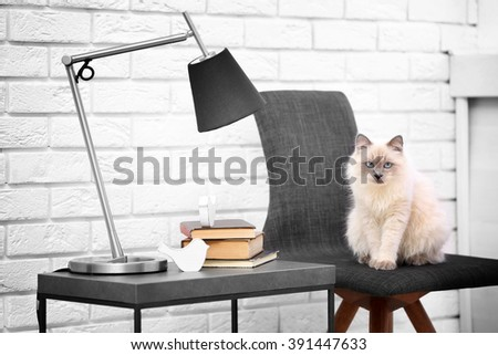 Color-point cat sitting on black chair in living room