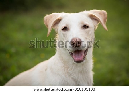 Color portrait of a cute dog outside - stock photo