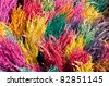 color rice crop - stock photo
