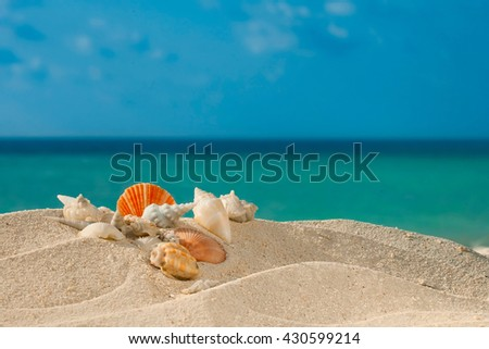 color Shells on white sandy beach front ocean - stock photo