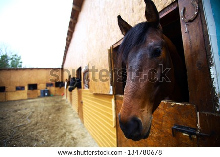 Color shot of a horse in a stable - stock photo