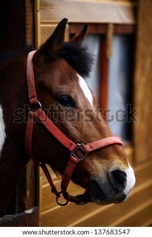 Color shot of a horse in a stable